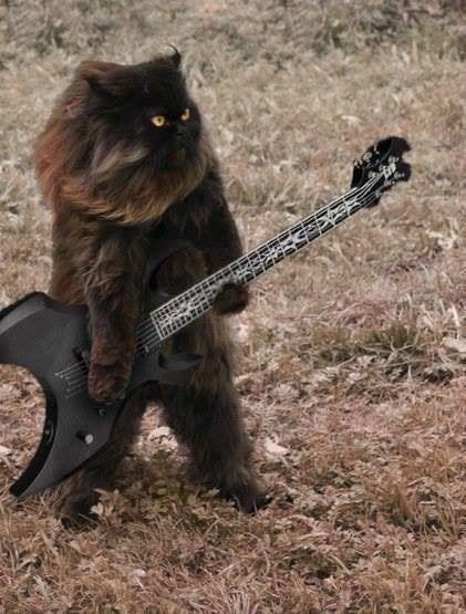 German Heavy Metal Cat